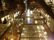 The Mammal Hall