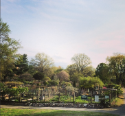 Fenway Victory Gardens